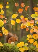 秋之精靈•松鼠:10.jpg