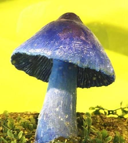 1.jpg - 真的有藍瘦香菇 , 百年難見 !