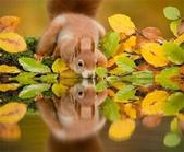 秋之精靈•松鼠:6.jpg