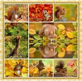 秋之精靈•松鼠:0.jpg