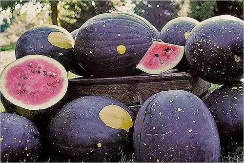 1.jpg - 這些水果吃過5種以上是土豪,吃過10種以上就是貴族!
