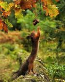 秋之精靈•松鼠:9.jpg