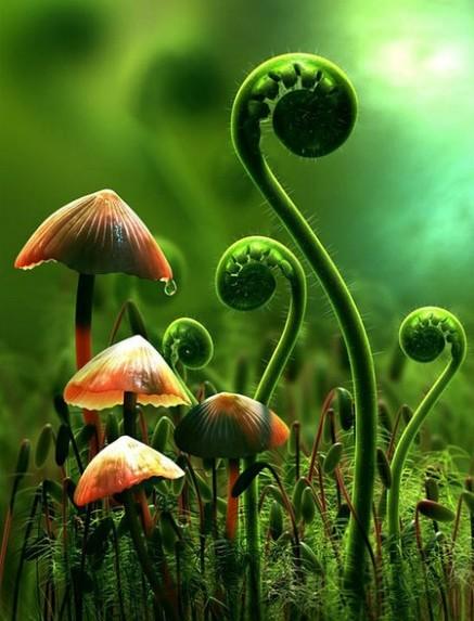 32.jpg - 真的有藍瘦香菇 , 百年難見 !