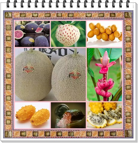 0.jpg - 這些水果吃過5種以上是土豪,吃過10種以上就是貴族!