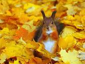 秋之精靈•松鼠:7.jpg