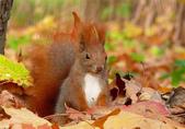 秋之精靈•松鼠:1.jpg
