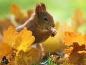秋之精靈•松鼠:5.jpg
