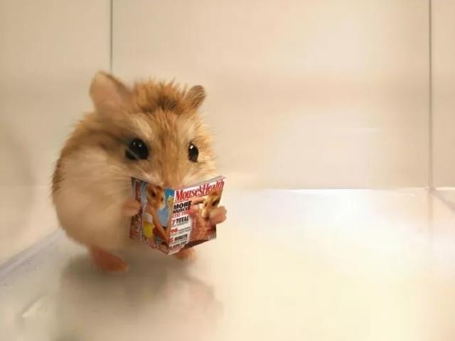 12.png - 鼠鼠派出動!