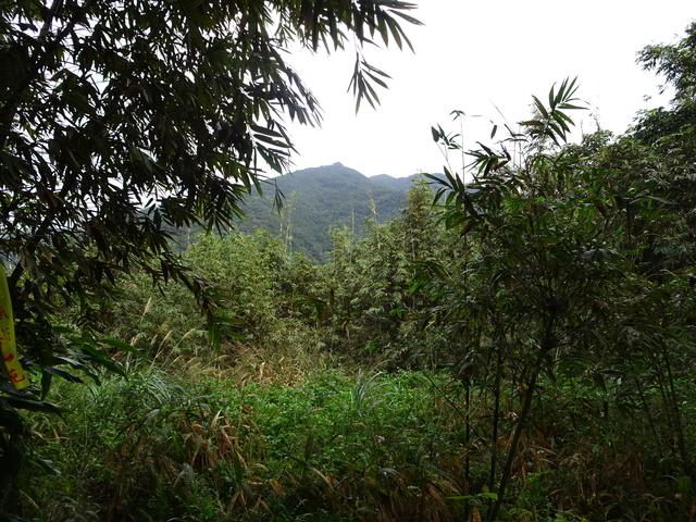 DSC01111.JPG - 2019.11.29 組合山 東峰 東山腰 鞍部四岔 獵徑切回稜 秘境 耘夢谷對岸路線