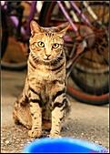 【不是我的貓】台北街貓:5494