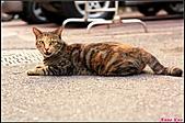 【不是我的貓】台北街貓:總是對我撒嬌喵喵叫,要我回應她5500