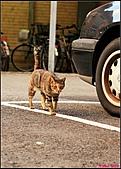 【不是我的貓】台北街貓:5504