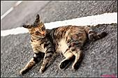 【不是我的貓】台北街貓:5523