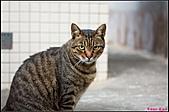 【不是我的貓】台北街貓:胖胖出現了!5527