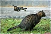 【不是我的貓】台北街貓:連巧克力都無言了5539