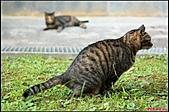 【不是我的貓】台北街貓:抱歉,讓大家看他上廁所 (出現後,第一件事竟然就在我面前便便@@)5540