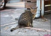【不是我的貓】台北街貓:也覺得我今天拿著黑盒子很詭異5548