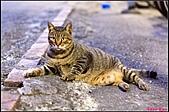 【不是我的貓】台北街貓:貴妃姿勢嗎?XD5569