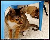 【不是我的貓】企鵝家的三隻小豬:焦點沒對錯喔!馬麻一直在偷玩昧有的尾巴!