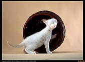 我的第一次棚拍--小賢寵物攝影課:阿!你這樣沒用啦!瞧我推動世界之輪1451