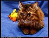 【不是我的貓】企鵝家的三隻小豬:李馬麻怎麼拍怎麼美,不管什麼顏色背景都美