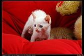 我的第一次棚拍--小賢寵物攝影課:喂!你在幹嘛?1504
