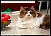 【不是我的貓】企鵝家的三隻小豬:她是李馬麻的小女兒