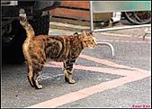 【不是我的貓】台北街貓:開始撒嬌5472