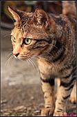【不是我的貓】台北街貓:5476