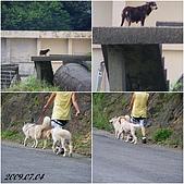 2009年到處玩(7-8月):基隆 黃金瀑布 狗狗cats.jpg