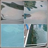 2010.05.15~05.17澎湖行:澎湖1 體驗海釣2cats.jpg