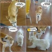 2009年到處玩(7-8月):基隆行 西胡休息站 狗狗連拍1cats.jpg