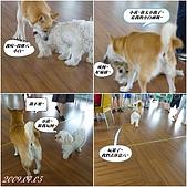 2009年到處玩(7-8月):基隆行 西胡休息站 狗狗連拍2cats.jpg