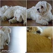 2009年到處玩(7-8月):基隆行 西胡休息站 狗狗連拍3cats.jpg