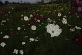 [2016] 一月份:玉山路賞花00010.JPG