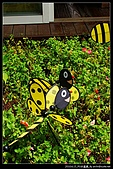 [古坑][2y4m] 蜜蜂故事館:nEO_IMG_DSC03816.jpg