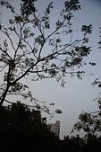 Sony A7II 拍照紀錄:文化公園004.JPG