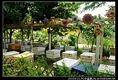[古坑][2y4m] 蜜蜂故事館:nEO_IMG_DSC03906.jpg