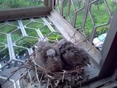 成功大學66級統計系同學:窗台上的鳥潘恆芝部落格1011205.jpg
