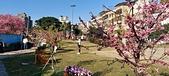 櫻花公園:20210207_085557.jpg
