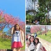 櫻花公園:相簿封面
