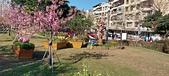 櫻花公園:20210207_085623.jpg