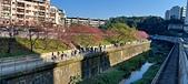 櫻花公園:20210207_085101.jpg