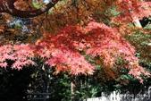 日本 鐮倉江之島:1010.jpg最後楓紅呀