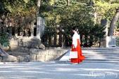 日本 鐮倉江之島:1005.jpg