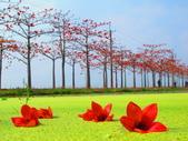 【台南】林初埤。季節限定美麗的木棉花道:IMG_9496.JPG