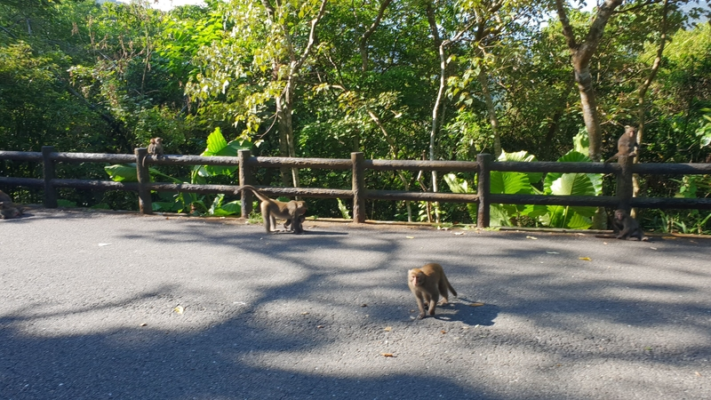 149802.jpg - 【宜蘭.冬山】免費景點推薦。仁山植物園寵物友善空間。猴子大肆出沒超可愛