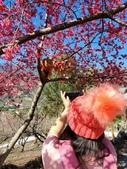 【南投.信義】1月季節限定美景。外坪頂蔡家秘境梅園。絕美水池倒影:128203.jpg