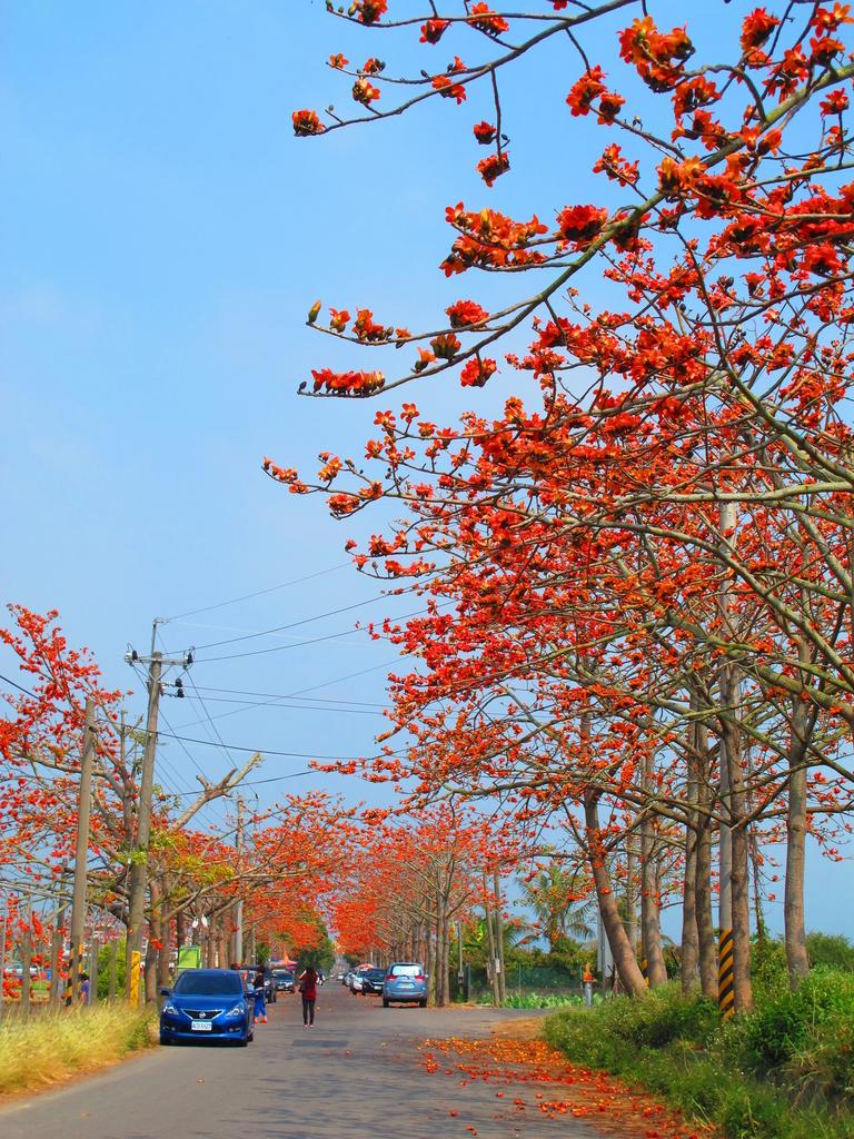 【台南】林初埤。季節限定美麗的木棉花道:IMG_9392.JPG