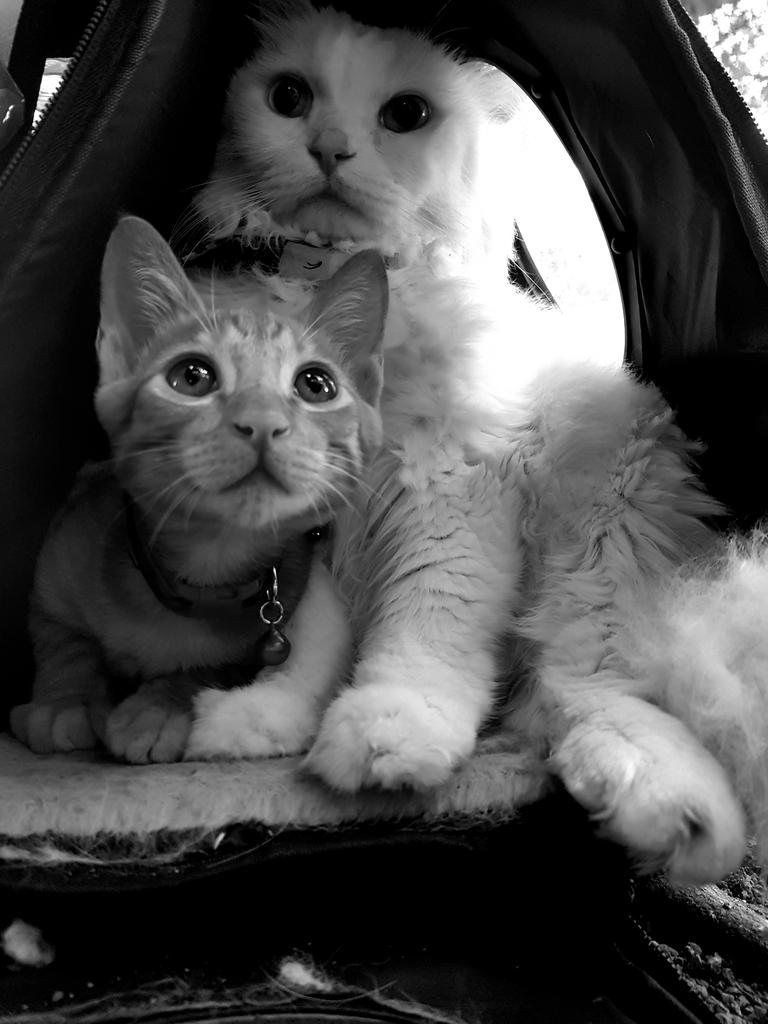 20171122_083757.jpg - 【寵物用品】貓狗外出太空背包兩款推薦(含拉桿款)。南洋峇里spa撰寫